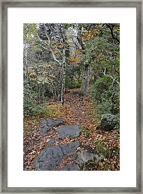 Deep In The Woods Framed Print by Susan Leggett