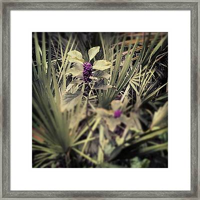 Deep Purple Berries Framed Print by Chasity Johnson
