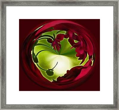 Deep Red Framed Print by Teresa Schomig
