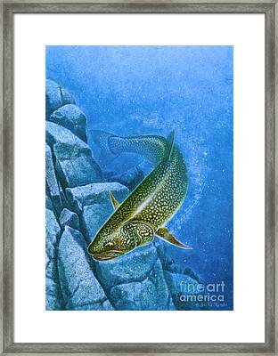 Deep Water Lake Trout  Framed Print by Jon Q Wright