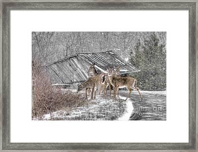 Deer Crossing Ahead Framed Print by Benanne Stiens
