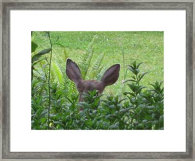 Deer Ear In A Mint Patch Framed Print by Kym Backland
