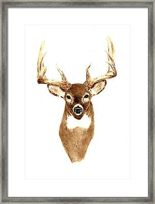 Deer - Front View Framed Print by Michael Vigliotti