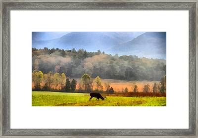Deer In Cades Cove Smoky Mountains National Park Framed Print by Dan Sproul