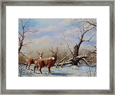 Deer In Crete Framed Print by Laurine Baumgart