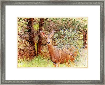 Deer In Forest Framed Print by Donna Haggerty