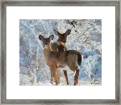 Deer In The Snow Framed Print by Elizabeth Coats