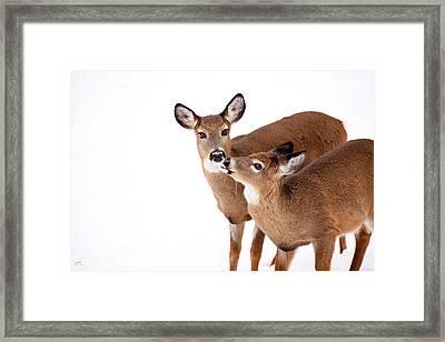 Deer Kisses Framed Print by Karol Livote