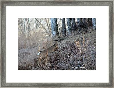 Deer Moving Upward Framed Print by Lorna Rogers Photography