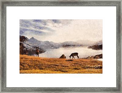 Deer On Mountain At Dusk Framed Print by Pixel Chimp
