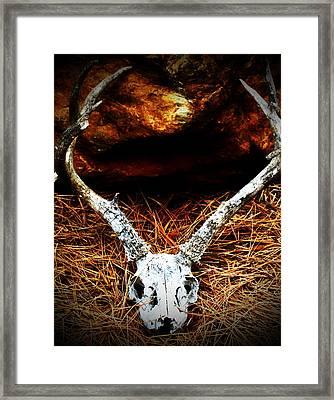 Deer Skull Framed Print by Christina Ochsner