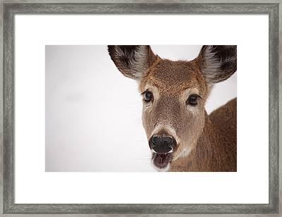 Deer Talk Framed Print by Karol Livote