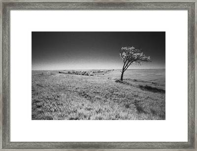 Defiance Framed Print by Thomas Bomstad