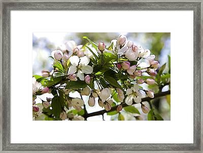 Defining Spring 3 Framed Print by Joanna Madloch