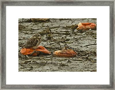 Deflated  Framed Print by Rob Mclean