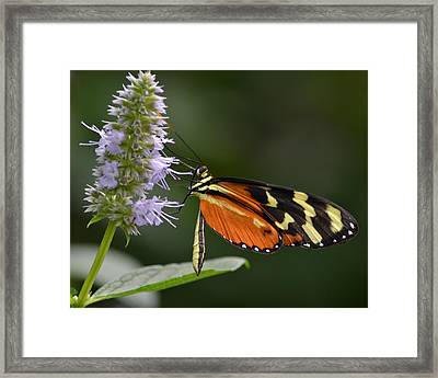 Delicacy Framed Print by Mary Zeman