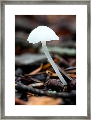 Delicate Framed Print by Aaron Aldrich