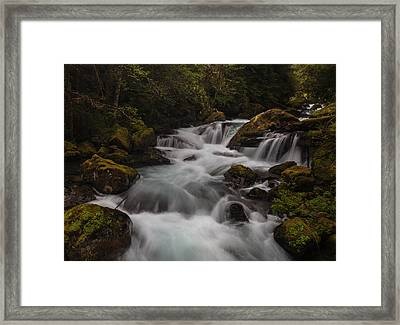 Delicate And Powerful Framed Print by Mike Reid