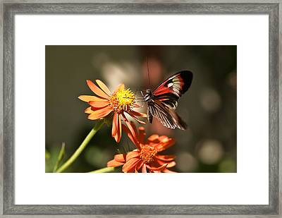 Delicate Beauty Framed Print by Michael Rucci