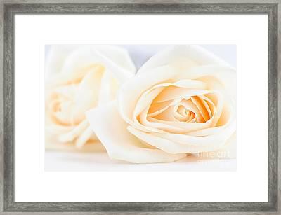 Delicate Beige Roses Framed Print by Elena Elisseeva