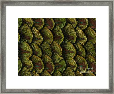 Delicate Feather Framed Print by Bedros Awak