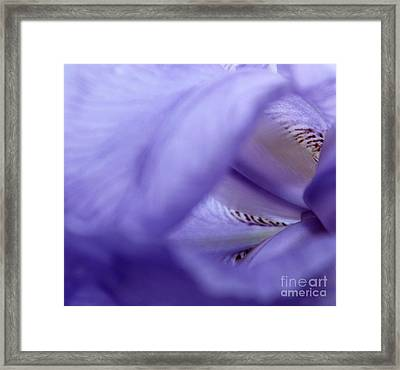 Delicate Purple Framed Print by Krissy Katsimbras