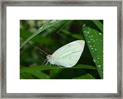 Delicate Framed Print by Tom Druin