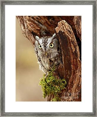 Delighted By The Eastern Screech Owl Framed Print by Inspired Nature Photography Fine Art Photography