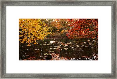 Delightful Autumn Framed Print by Lourry Legarde