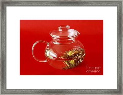 Delightful Blooming Tea Framed Print by Inspired Nature Photography Fine Art Photography