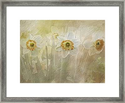 Delightful Daffodils Framed Print by Diane Schuster