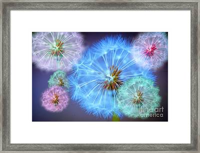 Delightful Dandelions Framed Print by Donald Davis