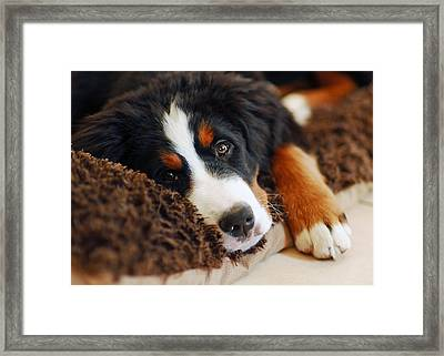 Delilah Framed Print by Lisa Phillips