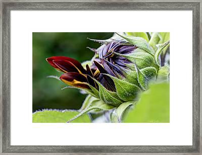 Demure Framed Print by Heidi Smith