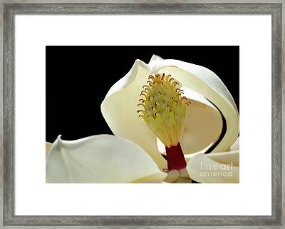 Demure Magnolia Framed Print by Sabrina L Ryan