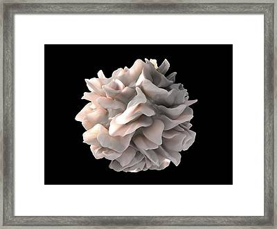 Dendritic Cell, Sem Framed Print by Science Photo Library