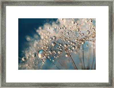 Denim Dandy Dazzle Framed Print by Sharon Johnstone