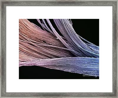 Dental Floss Sem Framed Print by Spl