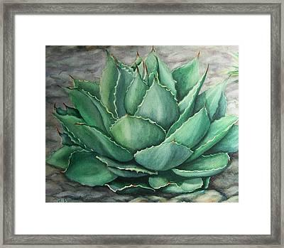 Desert Bloom Framed Print by Conni  Reinecke