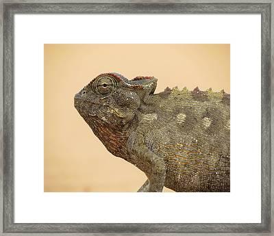 Desert Chameleon Framed Print by Ramona Johnston