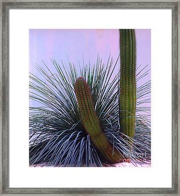 Desert Classic Framed Print by Ann Johndro-Collins