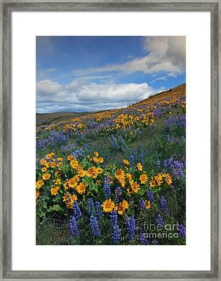 Desert Color Framed Print by Mike  Dawson