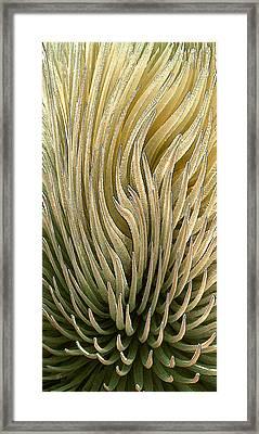 Desert Green Framed Print by Ben and Raisa Gertsberg
