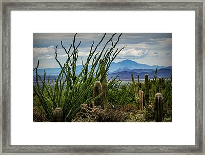 Desert Monsoon Framed Print by Pete Mecozzi