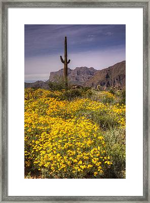 Desert Wildflowers  Framed Print by Saija  Lehtonen