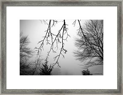 Design By Nature Framed Print by Brian Wallace