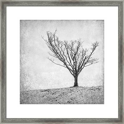 Desperate Reach Framed Print by Scott Norris