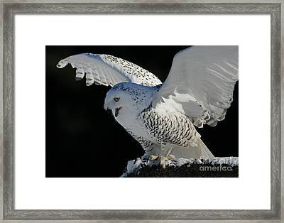 Destiny's Journey - Snowy Owl Framed Print by Inspired Nature Photography Fine Art Photography