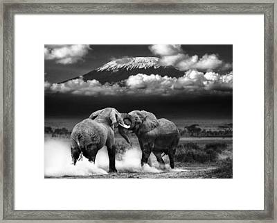 Determined To Dominate Framed Print by Mike Gaudaur