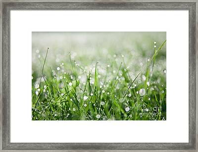 Dew Drenched Morning Framed Print by Jan Bickerton